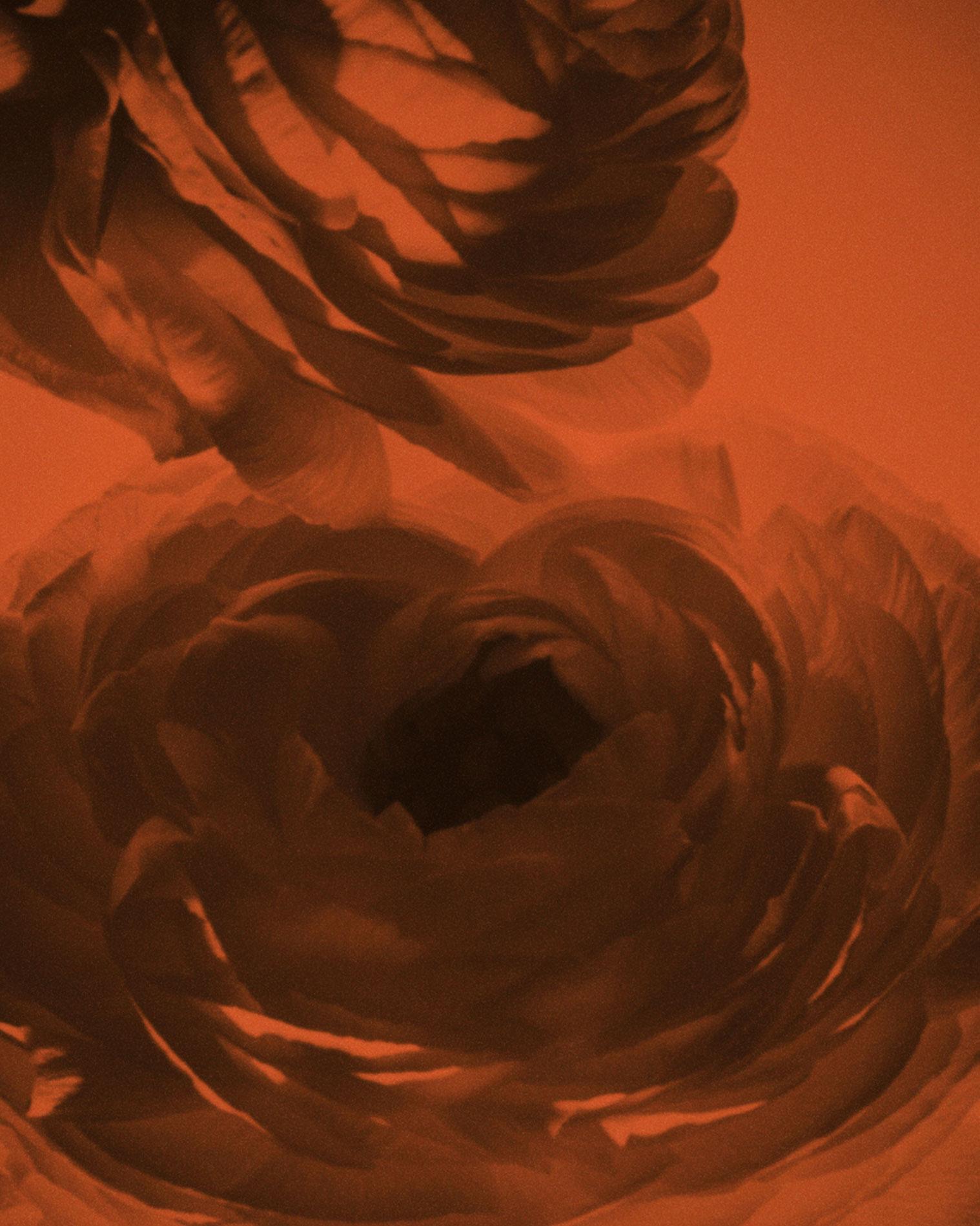 lena-herrmann-bloom-01